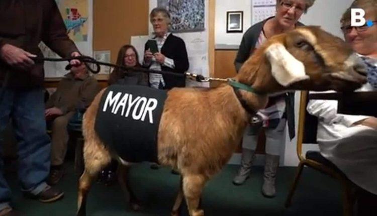 Des animaux sont élus comme maires pour collecter des fonds au Vermont